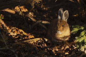 repoblaciones-de-conejos